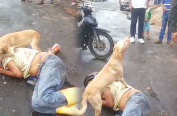 This-Kind-of-Dog-Will-Protect-You-the-Next-Time-You-Have-a-Hangover