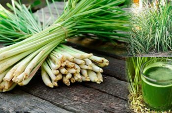 You-Get-These-5-Health-Benefits-When-You-Consume-Lemongrass